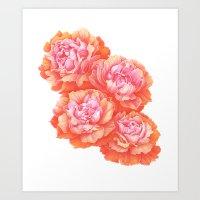 Peony Roses Art Print