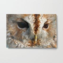 Owl Face Close-up Metal Print