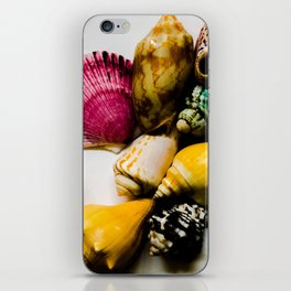 Summer Shell Collection iPhone Skin