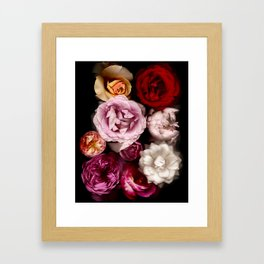Red, White, Yellow, and Pink Roses Framed Art Print