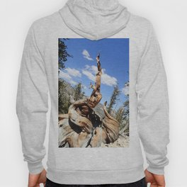 Oldest living things on earth Hoody