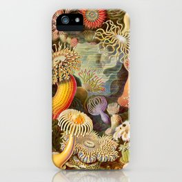 Haeckel Illustration - Marine Life iPhone Case