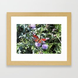 Sweet butterfly Framed Art Print