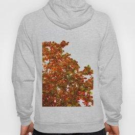 Red Leaves in Blue Hoody