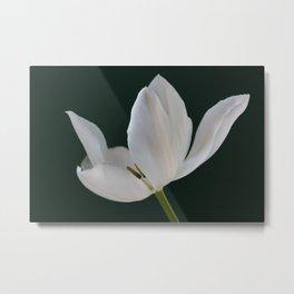 White Tulip Minimalism 2 Metal Print