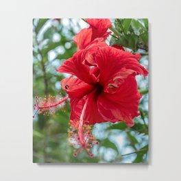 Wildflower Stamen // Beautiful Red Flower in Full Bloom Close Up Macro Photograph Metal Print