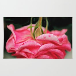 Fallen Pink Rose flower Rug