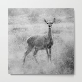 Doe A Deer A Female Deer, In Mono Metal Print