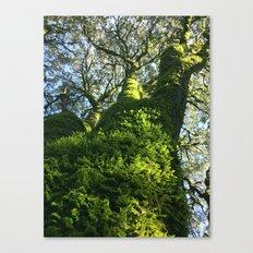 Trees! Castle Rock State Park - California Canvas Print