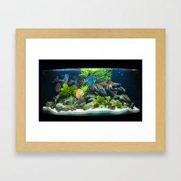 Aquarium fishes  Framed Art Print