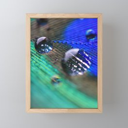 Peacock feather Framed Mini Art Print