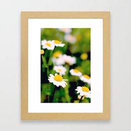 White Daisies Framed Art Print