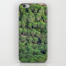 Young pine forest 6809 iPhone & iPod Skin