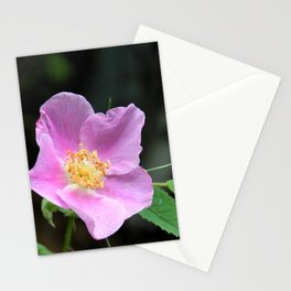 Pale Pink Wild Rose Stationery Cards