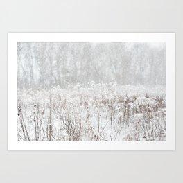 Snowy Field - Minnesota - Landscape and Nature Photography Art Print