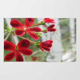 Red Pelargonium Rug