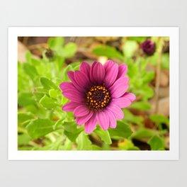 la flor Art Print