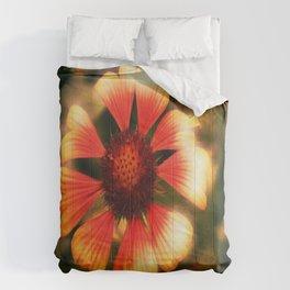 Augenblick  Comforters