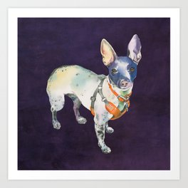 American Hairless Terrier Art Print