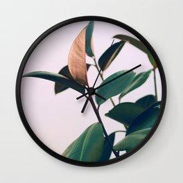 Ficus Elastica #4 Wall Clock