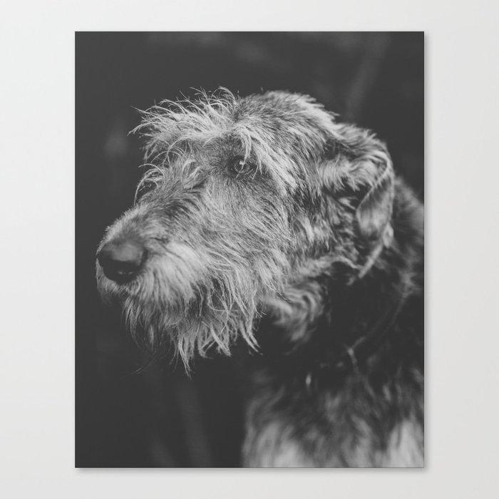 The Irish Wolfhound Canvas Print
