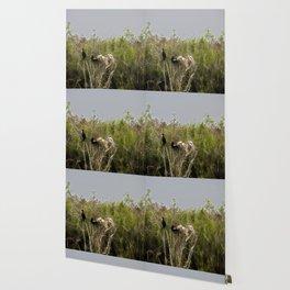 Anhinga Family Tree Wallpaper