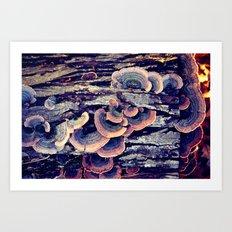 Wood Mushrooms Art Print