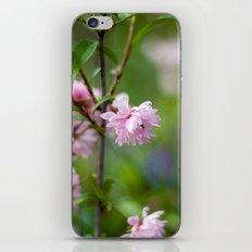 Flowering Almond Blossoms II iPhone & iPod Skin