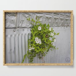 Pressed Tin and Weeds (Creeping Jenny) Serving Tray