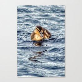 ducking swimming Canvas Print