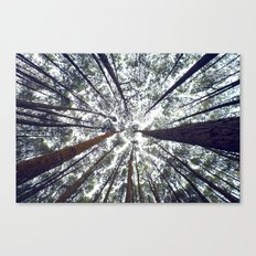 Light Through the Trees Canvas Print