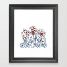 Pelargonium Framed Art Print