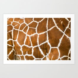 Giraffe skin close up illustration Art Print