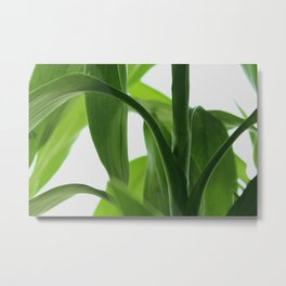 Bamboo Butterly Metal Print