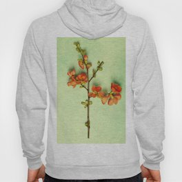 Peach blossom on a blue table as a spring concept Hoody