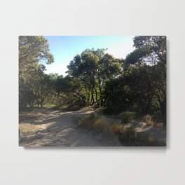 Summer's Day, Photography Metal Print