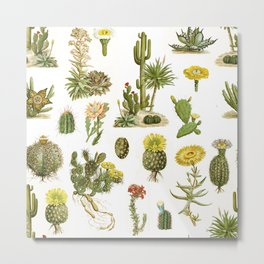 Antique Vintage Botanical Cacti Illustration Print Metal Print