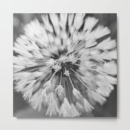 Black and white dandelion Metal Print