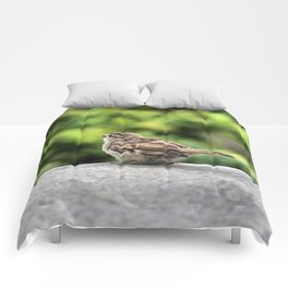 Little Feather Tasting Comforters