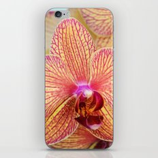 Explosion of Orchids iPhone & iPod Skin