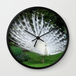 White Peacock of Isola Bella Wall Clock