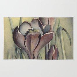 Purple Crocus Flowers in the Spring Rug