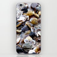 shells iPhone & iPod Skins featuring Shells by Anne Seltmann
