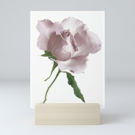 Single Rose Mini Art Print
