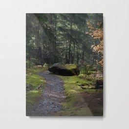 Mossy path Metal Print