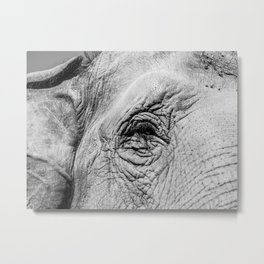 The eye of the Elephant Metal Print