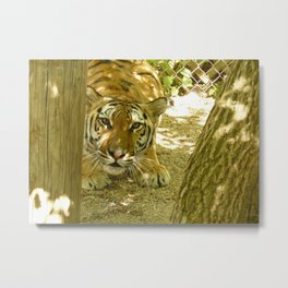 Lena the Playful Tiger Metal Print