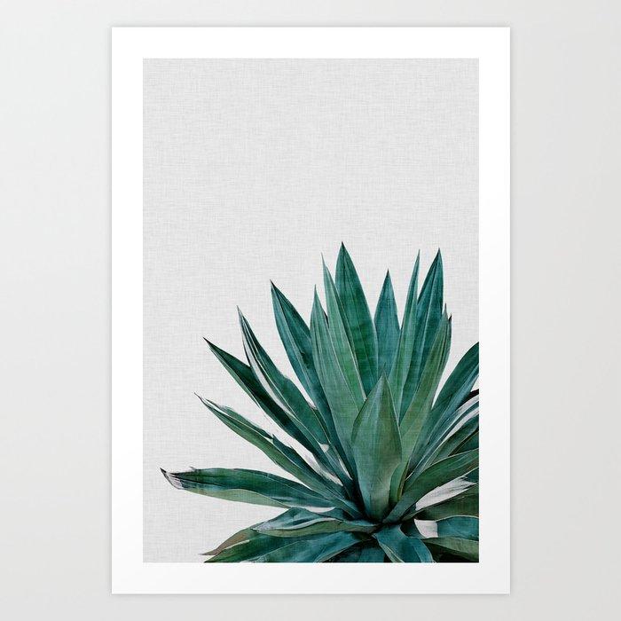 Agave Cactus Art Print