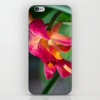 tequila iPhone & iPod Skins featuring Tequila Sunset by Robin Anguiano