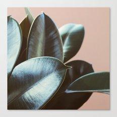 Ficus Elastica #2 Canvas Print